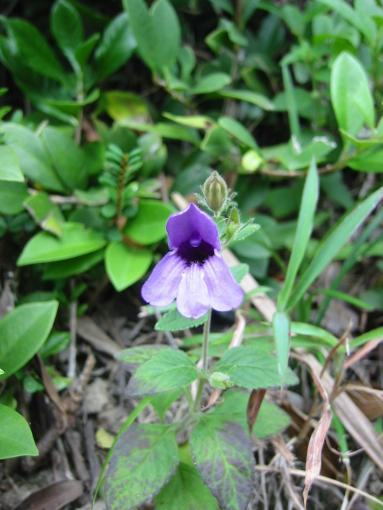 Flower on path up from Sai Wan