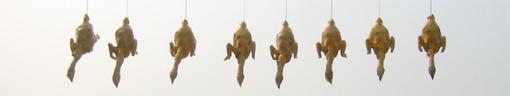 Cheung Chau Chickens