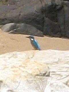 Bird at Waterfall Bay